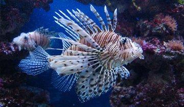 pierwsza-pomoc-w-stanach-zagrozenia-spowodowanych-przez-zwierzeta-i-rosliny-morskie